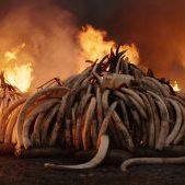 anthropocene-tusk-burn-vr